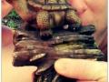 Bekanntschaft im Wald mit einer Schildkröte