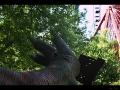 Dinofuß